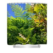 Salal Blooms Amongst The Ferns Shower Curtain