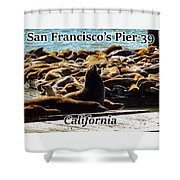 San Francisco's Pier 39 Walruses 1 Shower Curtain
