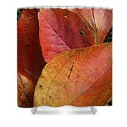 Sassafras Autumn Shower Curtain