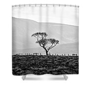Scottish Highland Tree In Black And White Shower Curtain