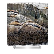 Sea Lions Sleeping On Rock Shower Curtain