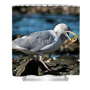 Seagull Carrying Snail Shower Curtain