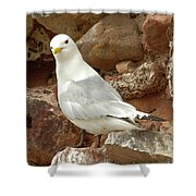 Seagull On Rock Shower Curtain