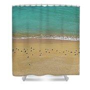 Seagulls Relaxing In Deserta Beach Shower Curtain