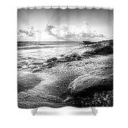 Seashells On The Seashore In Black And White Shower Curtain
