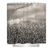 Sepia Field Of Corn Shower Curtain