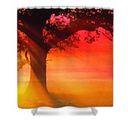 Shade Tree At Dawn Shower Curtain