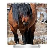 Shaggy Stallion Shower Curtain