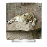 She Lion Shower Curtain