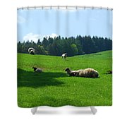 Sheep And Lambs In A Field Shower Curtain