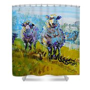 Sheep And Lambs In Bright Sunshine Shower Curtain