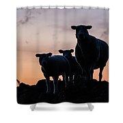 Sheep Family Shower Curtain