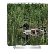 Shovel Tail In Shallows Shower Curtain