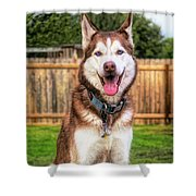 Siberian Husky Digital Art A030819 Shower Curtain