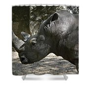 Side Profile Of A Large Rhinoceros With Two Horns  Shower Curtain