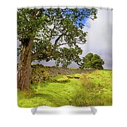 Silent Sentinel - Acharn Scotland - Drystane Dyke Shower Curtain by Jason Politte