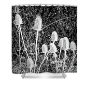 Silver Thistle Seed Pods Shower Curtain