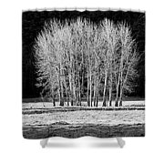 Silver Trees, Yosemite National Park Shower Curtain