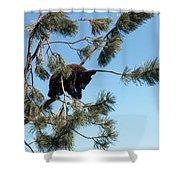 Sleeping Bear Cub Shower Curtain