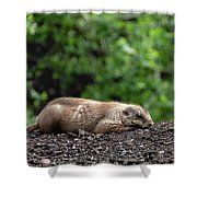 Sleeping Prairie Dog Shower Curtain by Scott Lyons