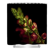 Snapdragon In Red Shower Curtain
