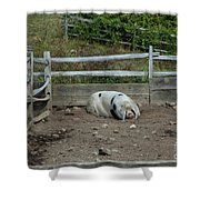 Snoozing Hog Shower Curtain