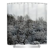 Snow Covered Trees Shower Curtain by Rose Santuci-Sofranko