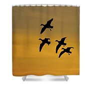 Snow Geese Landing At Sunset Shower Curtain