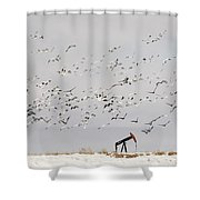 Snow Geese Over Oil Pump 01 Shower Curtain by Rob Graham