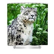 Snow Leopard, Leopard Art, Animal Decor, Nursery Decor, Game Room Decor,  Shower Curtain by David Millenheft
