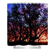 Sonoran Sunrise Ironwood Silhouette Shower Curtain