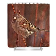 Sparrow In The Sunshine Shower Curtain