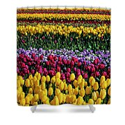 Spectacular Rows Of Colorful Tulips Shower Curtain