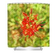 Spider Lily Pop Shower Curtain
