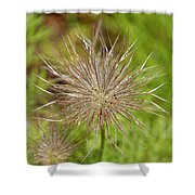 Spiky Plant Pulsatila Halleri Shower Curtain
