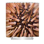 Spiny Urchin Shower Curtain