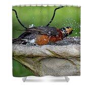 Splish-splash I Was Taking A Bath - American Robin Shower Curtain