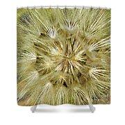 Dandelion Bloom Shower Curtain