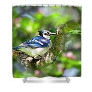 Spring Blue Jay Shower Curtain