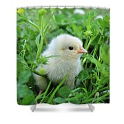 Spring Chick Shower Curtain