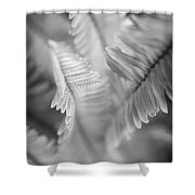 Spring Fern Macro In Black And White Shower Curtain