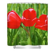 Spring Trio Shower Curtain by Emily Johnson