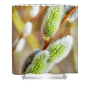 Spring Willow 4 Shower Curtain
