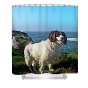Springer Spaniel Dog In Sennen Cove Shower Curtain