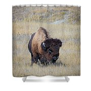 Standing Bull Shower Curtain