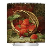 Still Life Of Strawberries With A Cabbage White Butterfly Shower Curtain