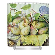 Still Life With Plums, Walnuts And Jasmine Shower Curtain