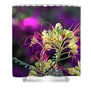Stream Of Colored Highlights Leads To Yellow Bird Of Paradise Shower Curtain