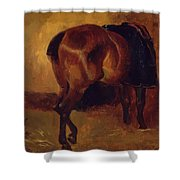 Study For Bay Horse Seen From Behind Shower Curtain