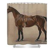 Study Of A Saddled Bay Hunter, 1828  Shower Curtain
